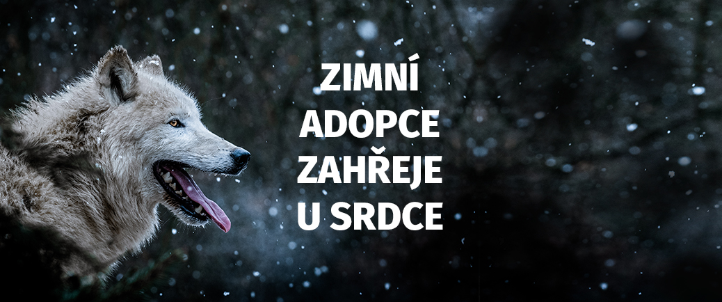 Pomoz zoo, adoptuj zvíře!