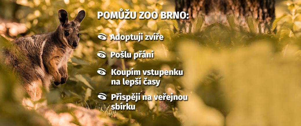 Pomůžu Zoo Brno