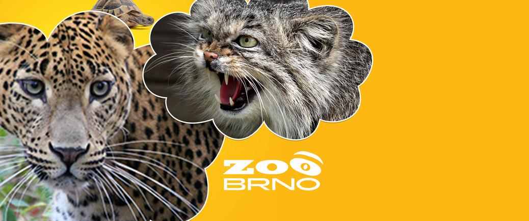 Adopce a sponzorství v Zoo Brno