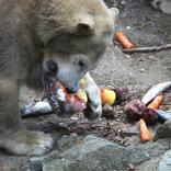 Prodloužený víkend s ledními medvědy 25. - 27. 2. 2017