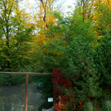 Podzim v Zoo Brno 12. 10. 2017