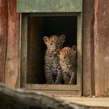 Světový den divoké přírody 3. 3. 2018