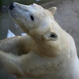 International Polar Bear Day 24. 2. 2018