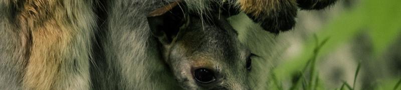 Austrálie_Vklokaníkapse