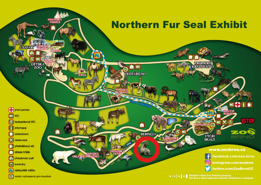 _Northern Fur Seal Exhibit_ok