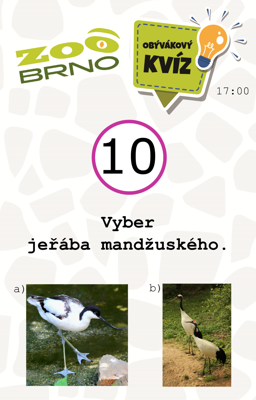 _otazka10_zirafyajerabi