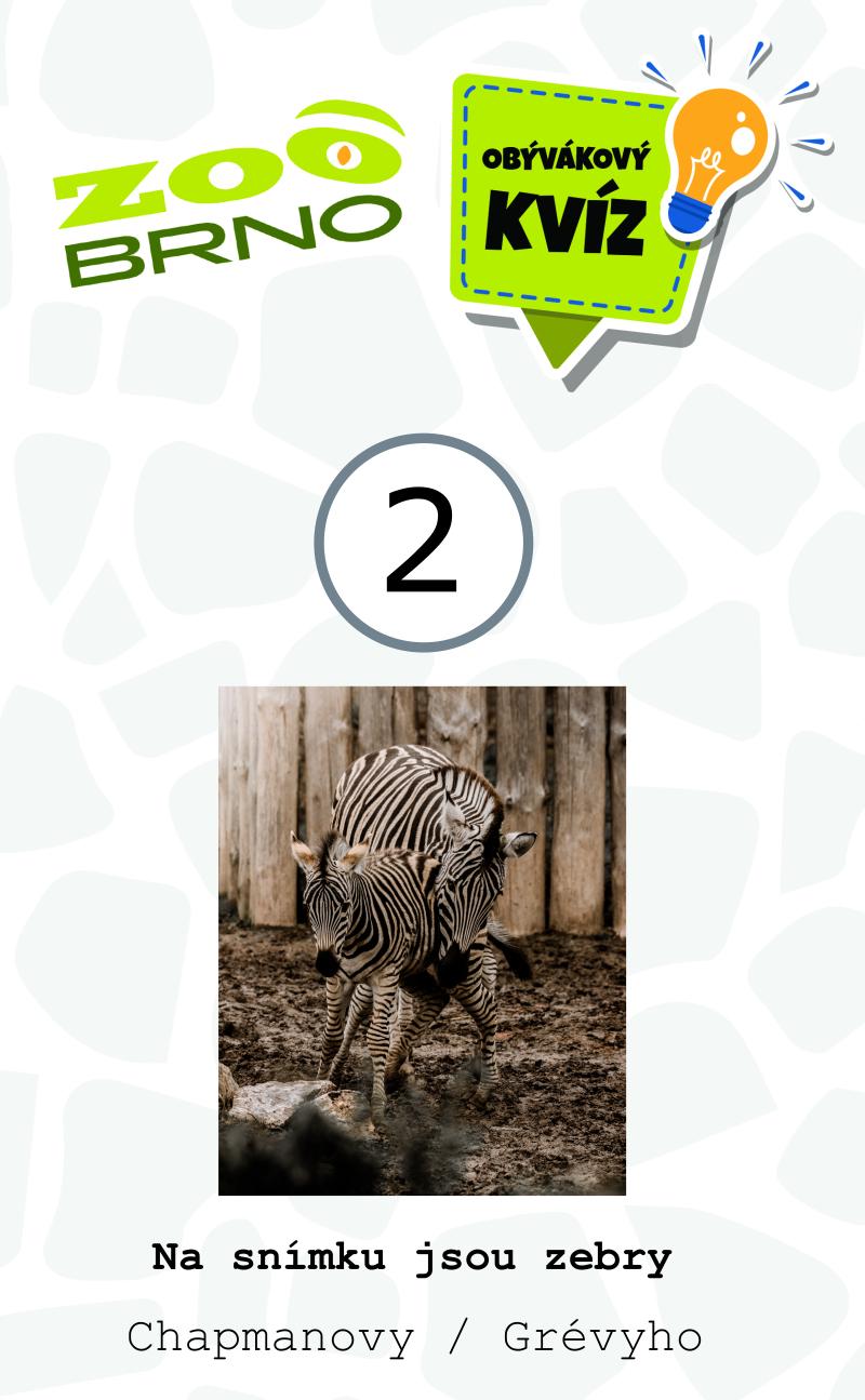 _otazka2_zebry