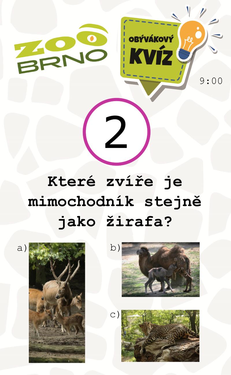 _otazka2_zirafyajerabi