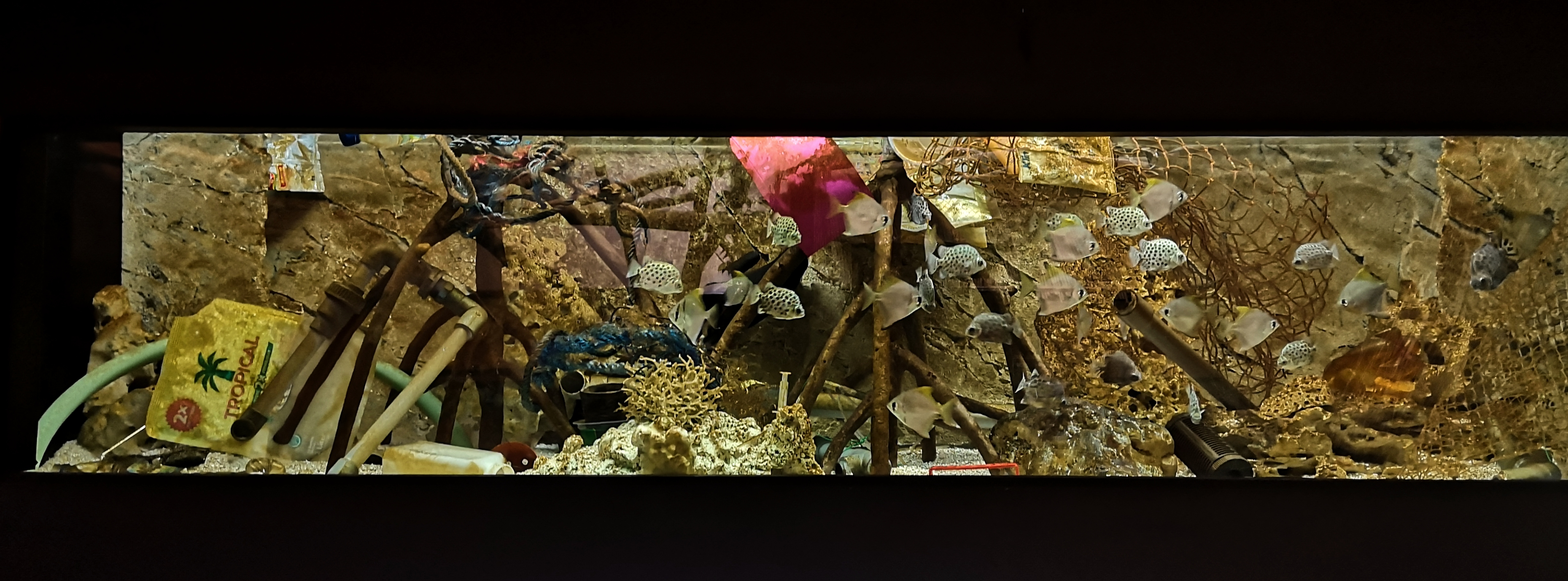 akváriumsplasty1_FotoZooBrno