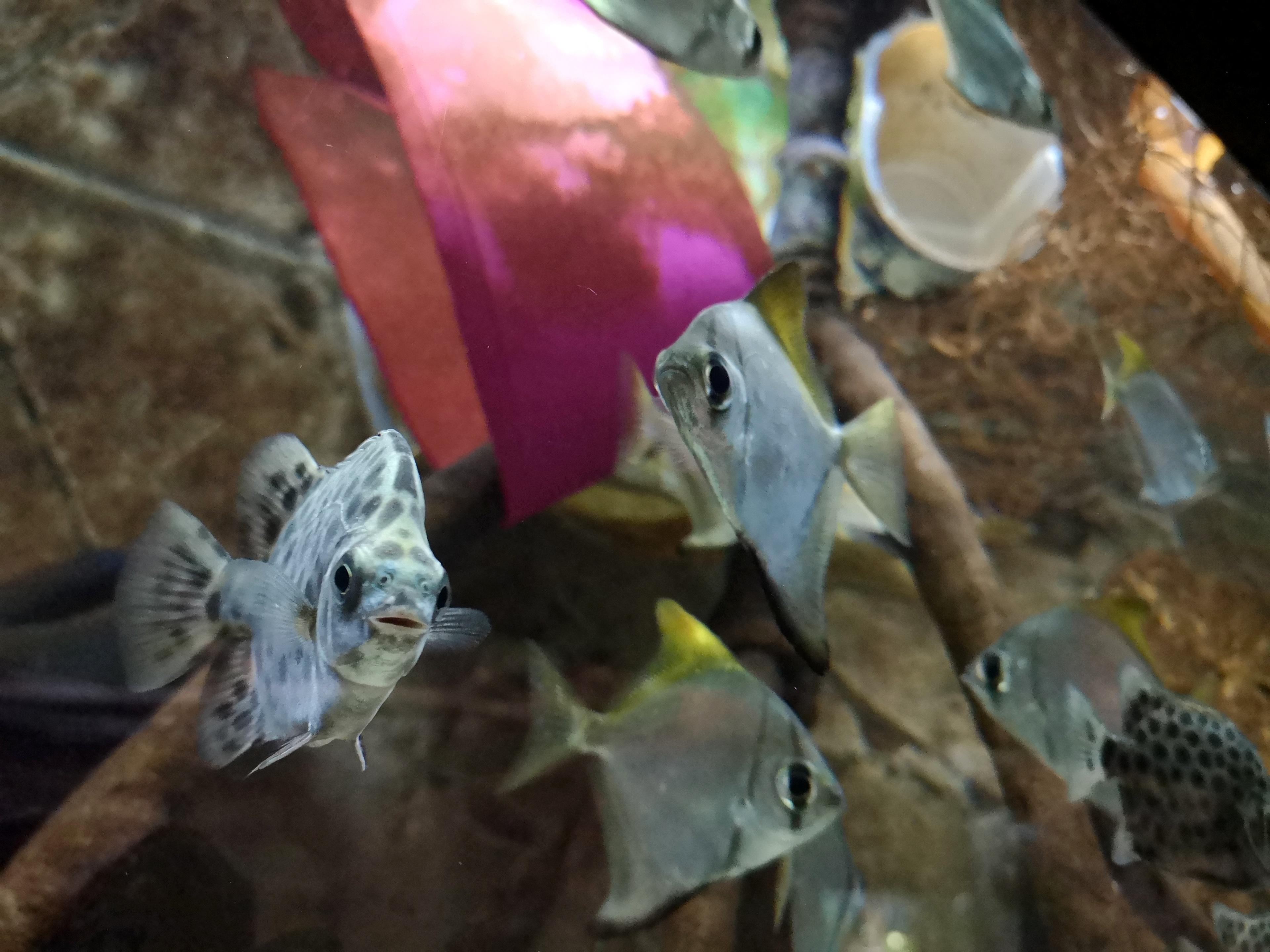 akváriumsplasty2_FotoZooBrno