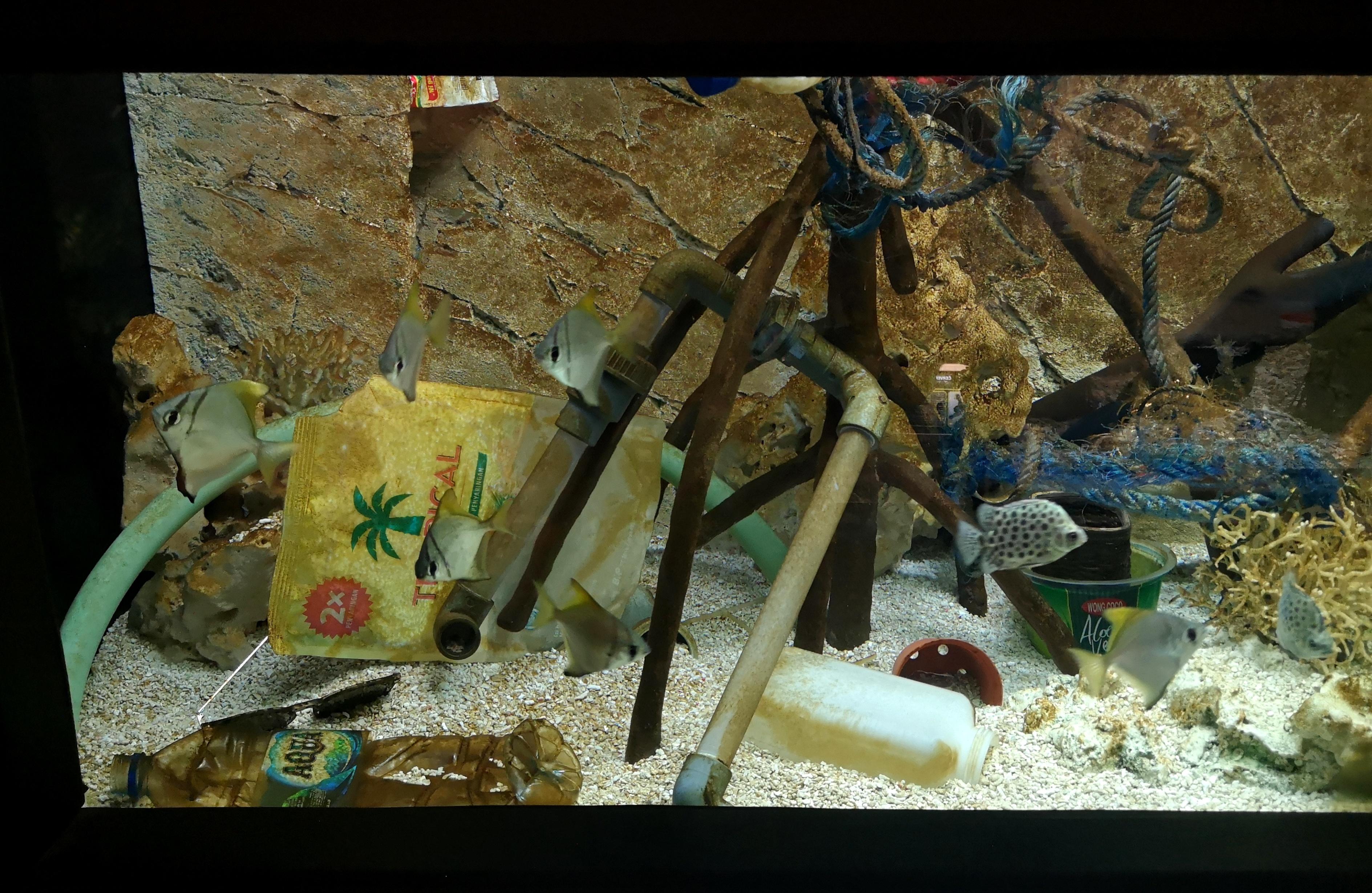 akváriumsplasty3_FotoZooBrno