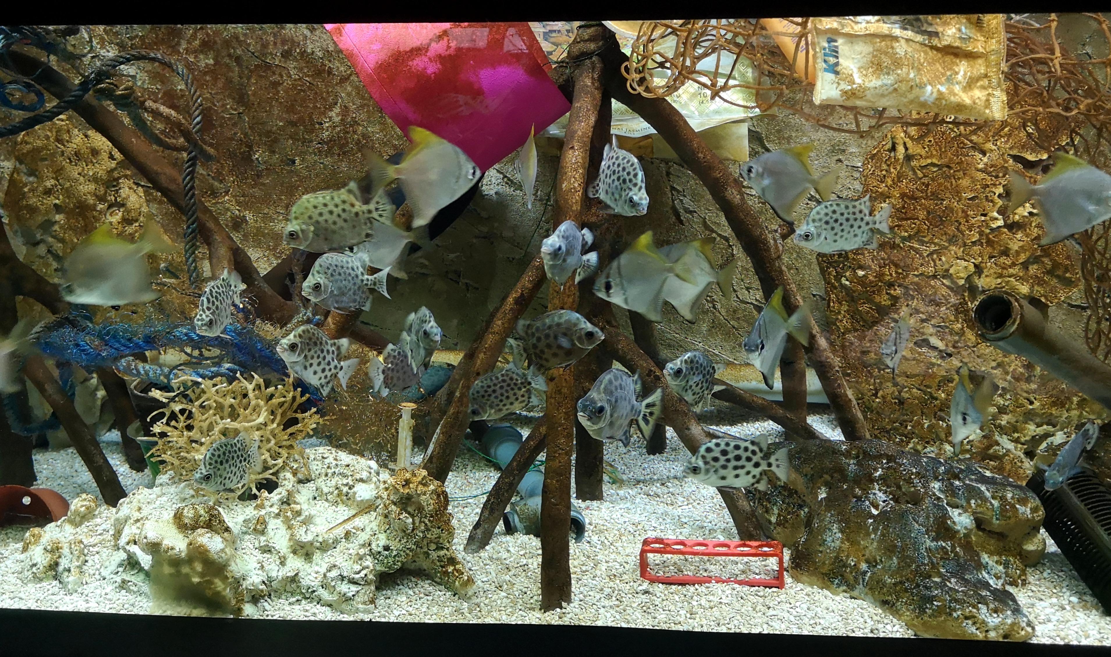 akváriumsplasty4_FotoZooBrno
