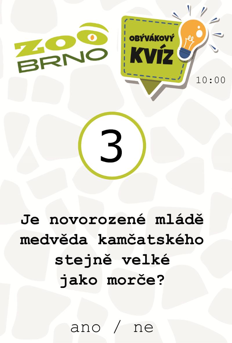 medvedi_otazka3