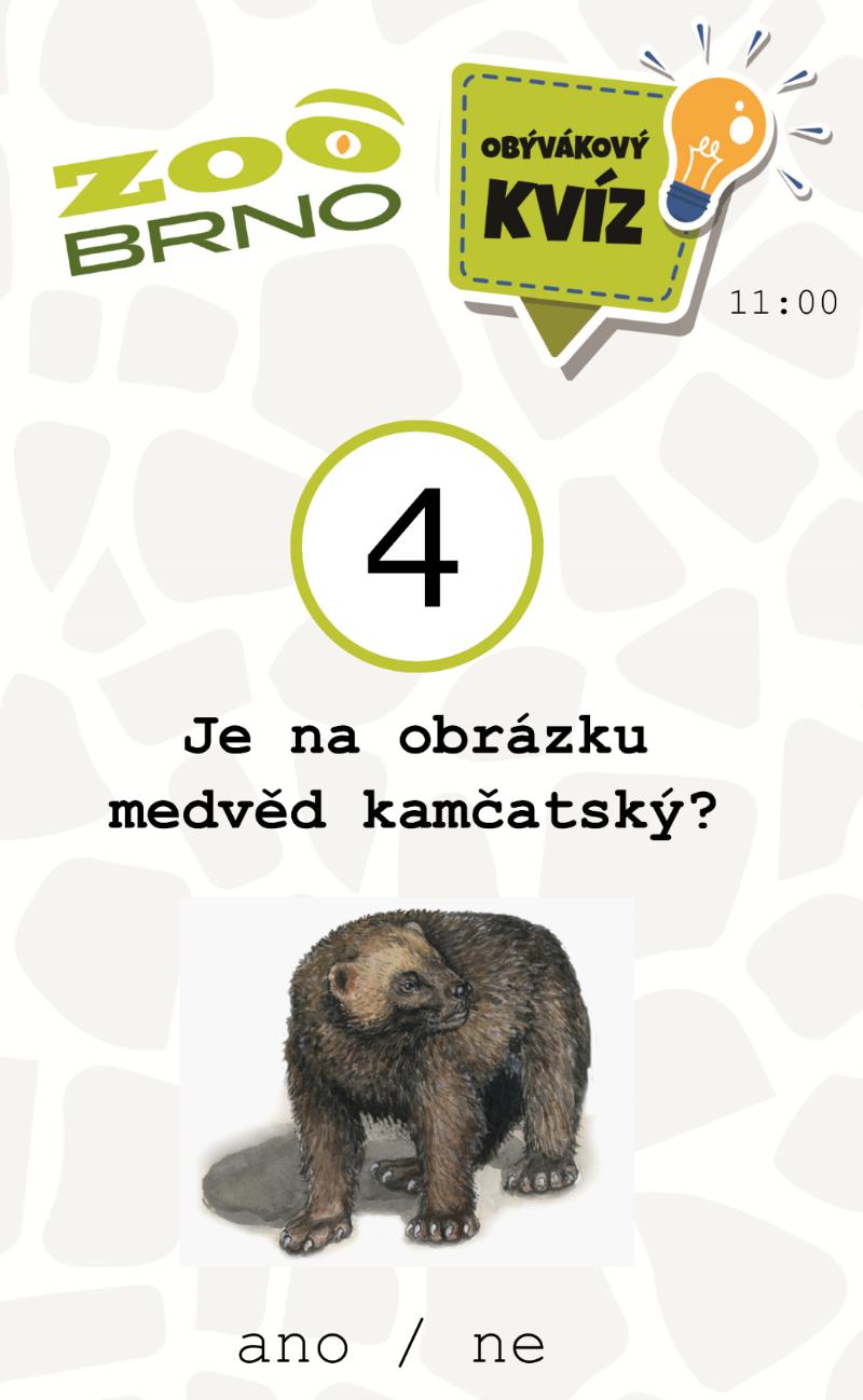 medvedi_otazka4