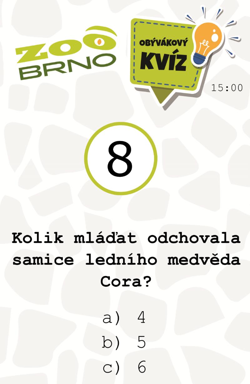 medvedi_otazka8