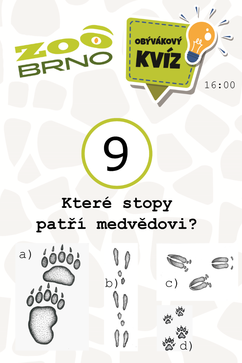 medvedi_otazka9