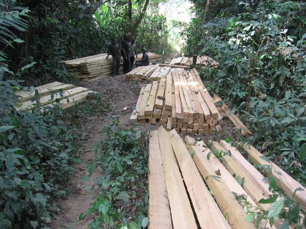Nelegální těžba dřeva vNigérii ©Inaoyom Imong WCS