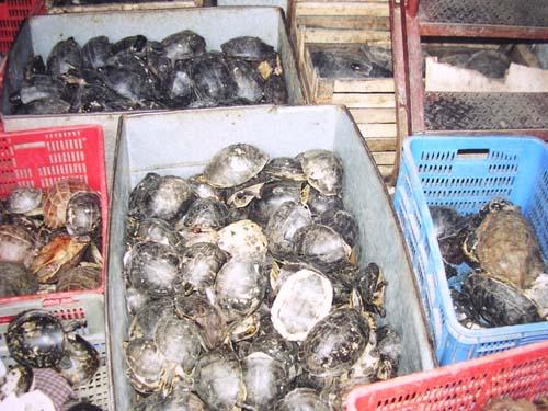 Krabice plné želv na trhu vČíně Foto Budischek