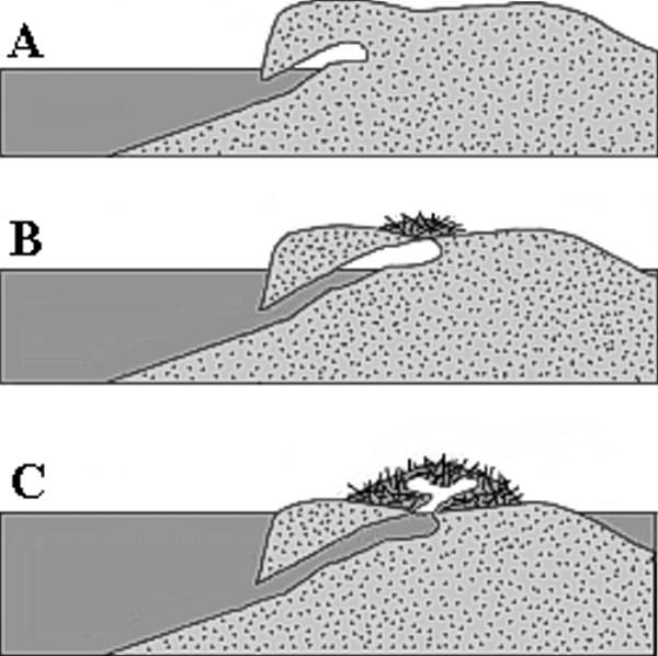 Obr. 2 Typy bobřích úkrytů: nora (A), polohrad (B) ahrad (C)