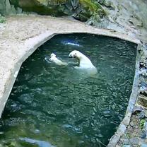 Noria se učí plavat