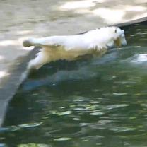 Noria skáče do vody
