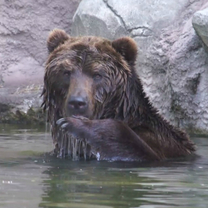 Jelizar se koupe