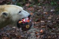Narozeniny ledních medvědů 19. 11. 2016