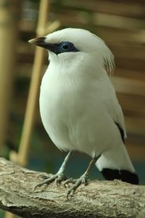 Den ptactva pro školy 28.3.2018