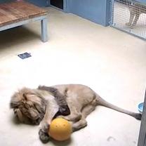 Lolek and yellow ball