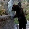 Kamchatka Brown Bears
