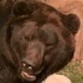 Kamchatka has got cubs