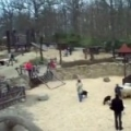 We welcome spring in Zoo Brno