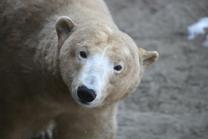 Mezinárodní den ledních medvědů 24. 2. 2018