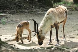 Zoo Brno nabízí nové zážitkové programy