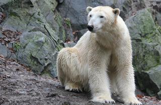 Mezinárodní den ledních medvědů