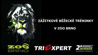 Běžecký trénink v Zoo Brno