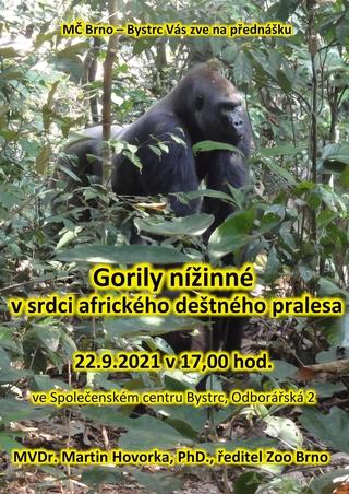 Gorily nížinné v srdci afrického deštného pralesa