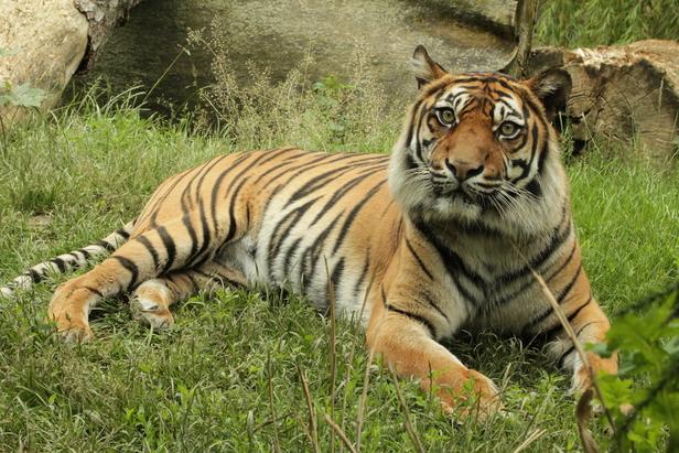 Tiere und Tieranlagen